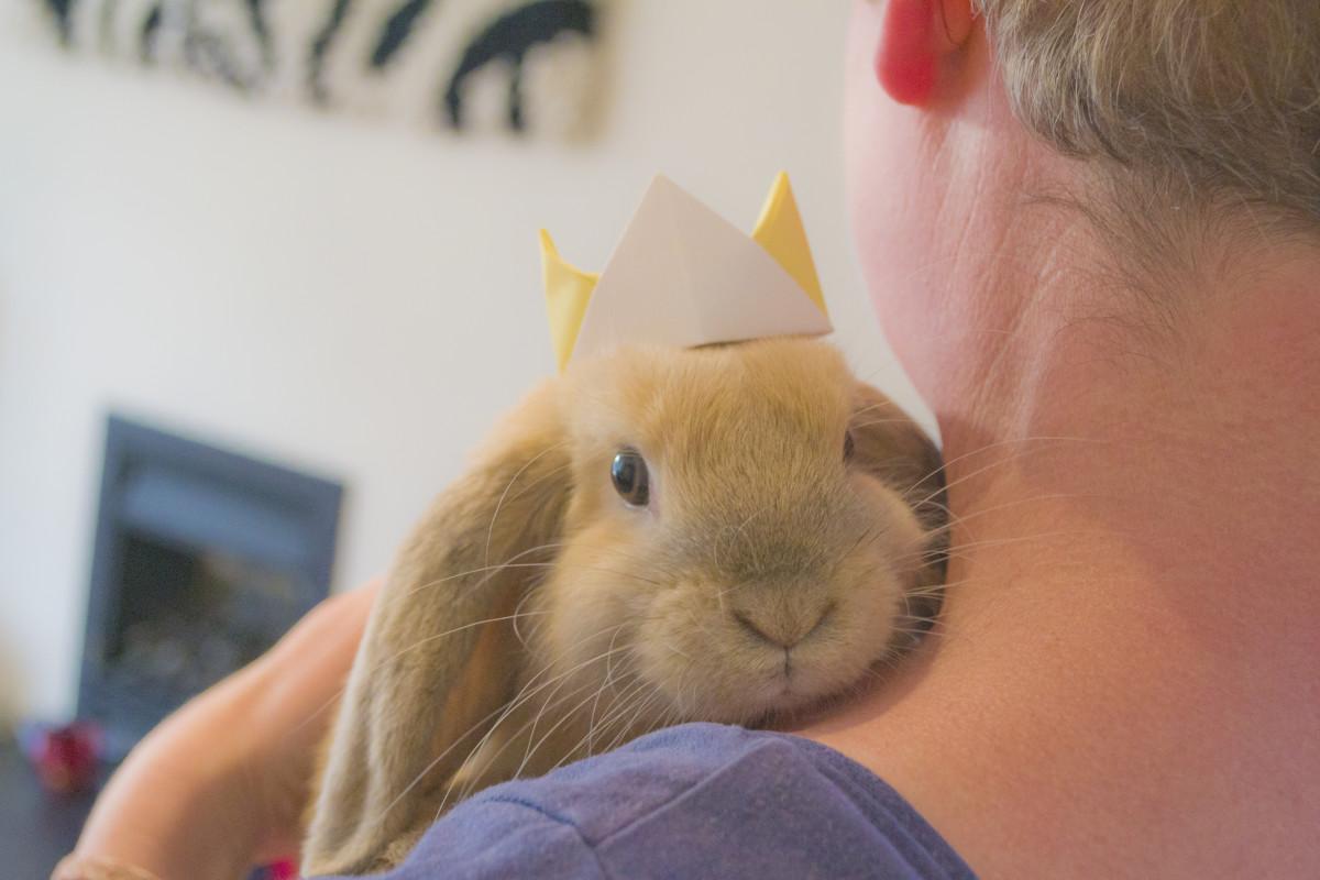 bunny-breed-guide-mini-lop-rabbits