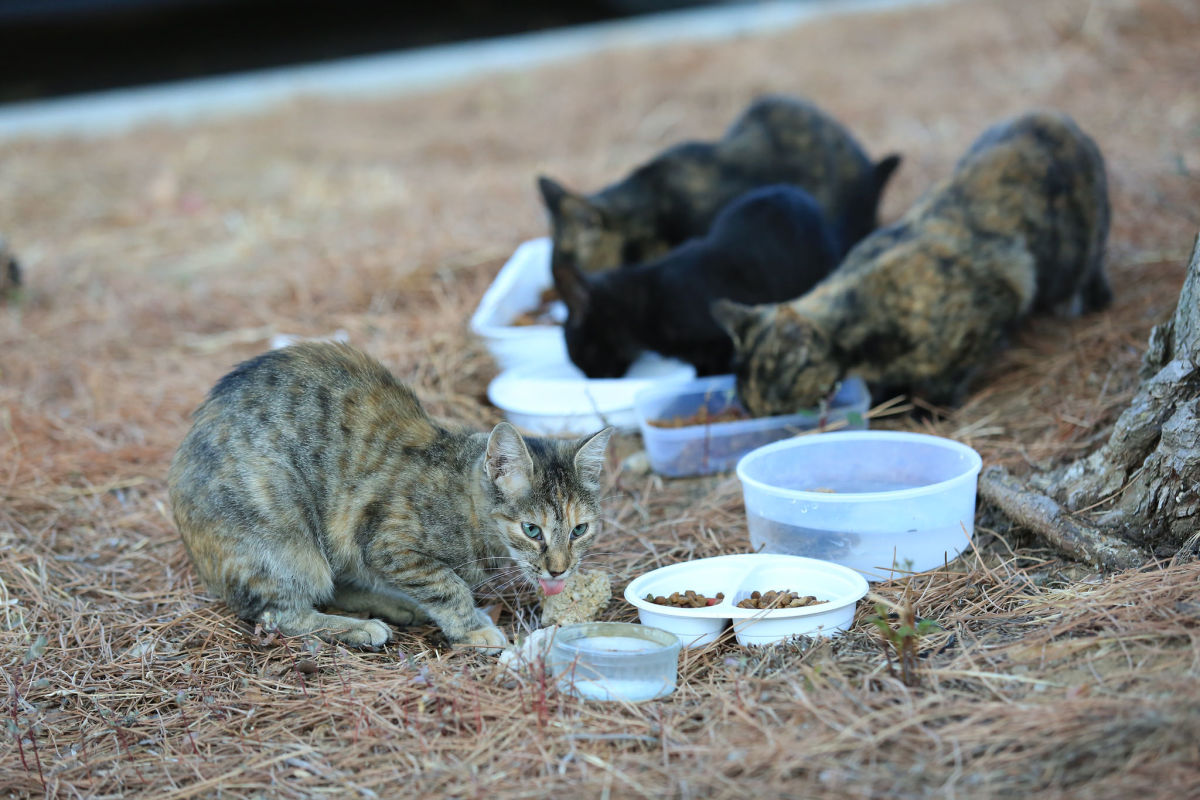 Outdoor cats will need ample fresh food and water to make it through harsh winters.