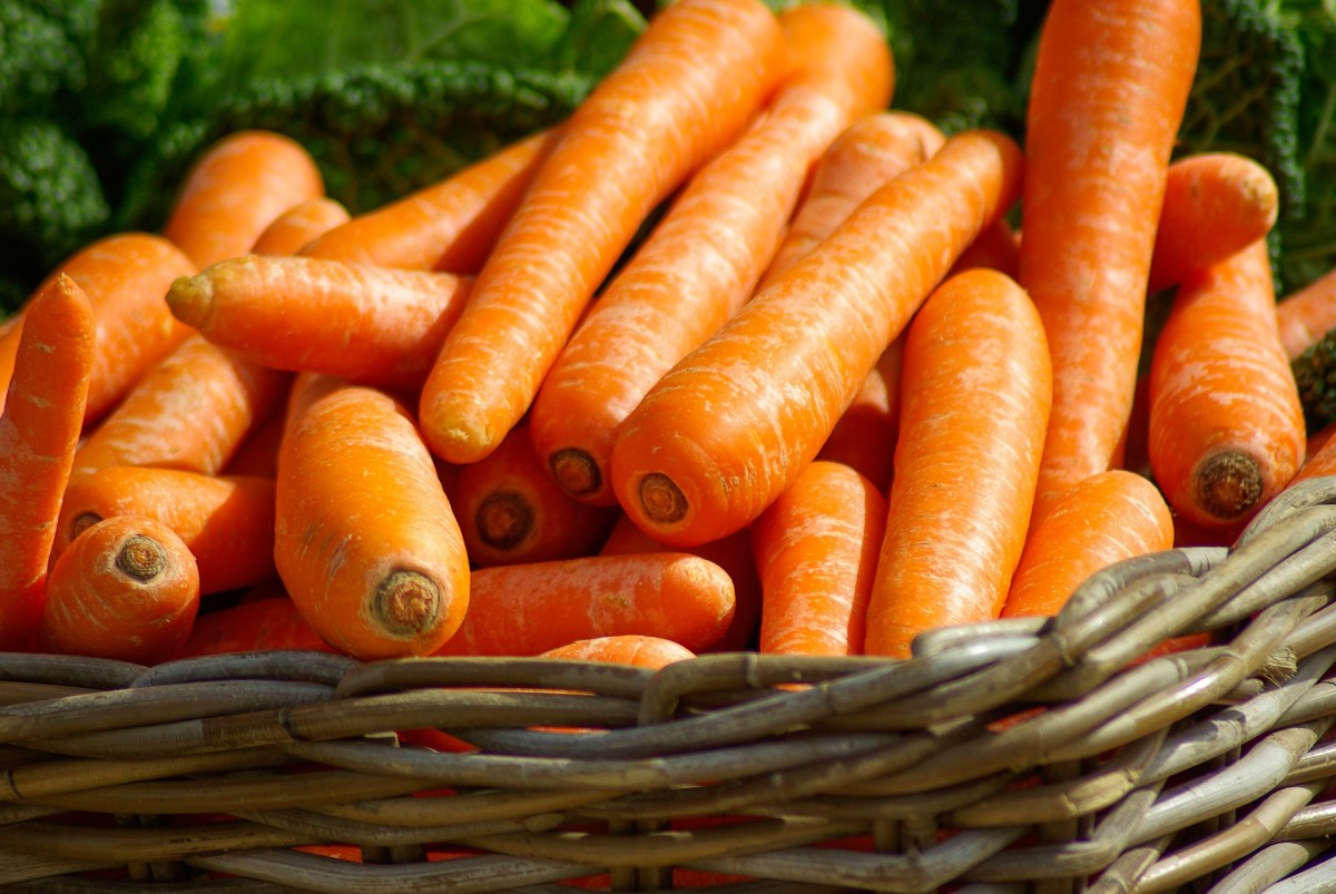 Fresh vegetables like carrots should only be fed in small amounts.