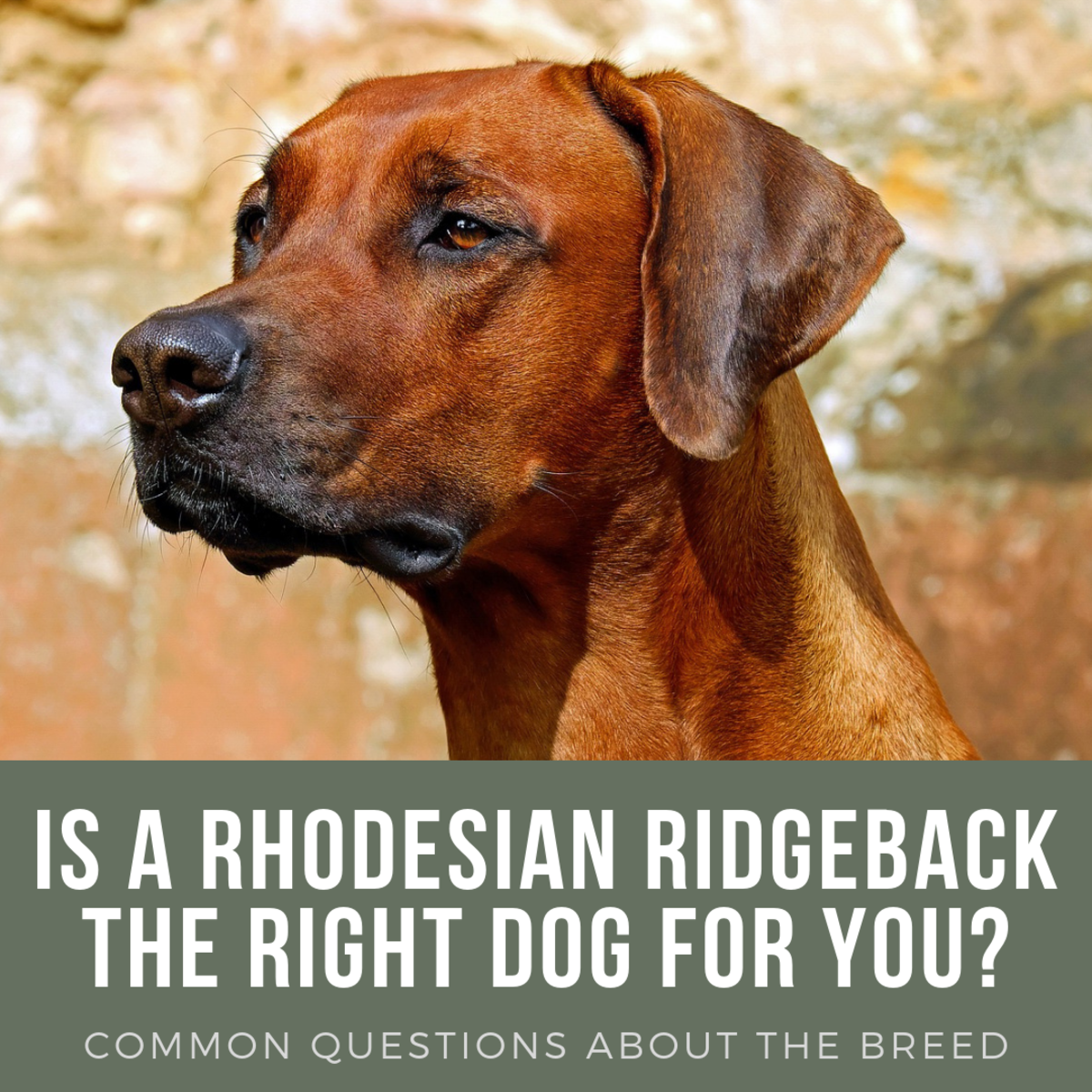 Learn more about this breed's temperament, care requirements, and preferred training methods.