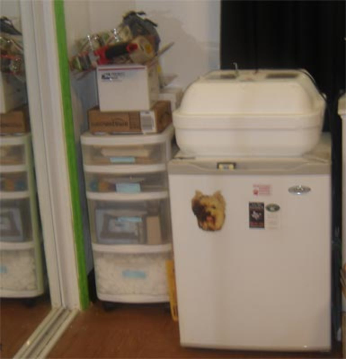 Mini- Fridge to house open baby foom, mealworms, frozen mice, etc.; incubator; packing supplies to left.