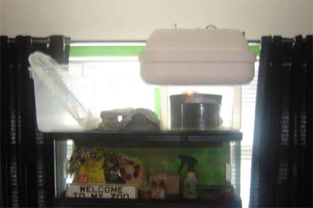 Empty hatchling crested gecko tub, extra incubator, slate tiles, 2 digitial scales, and photography backgrounds.