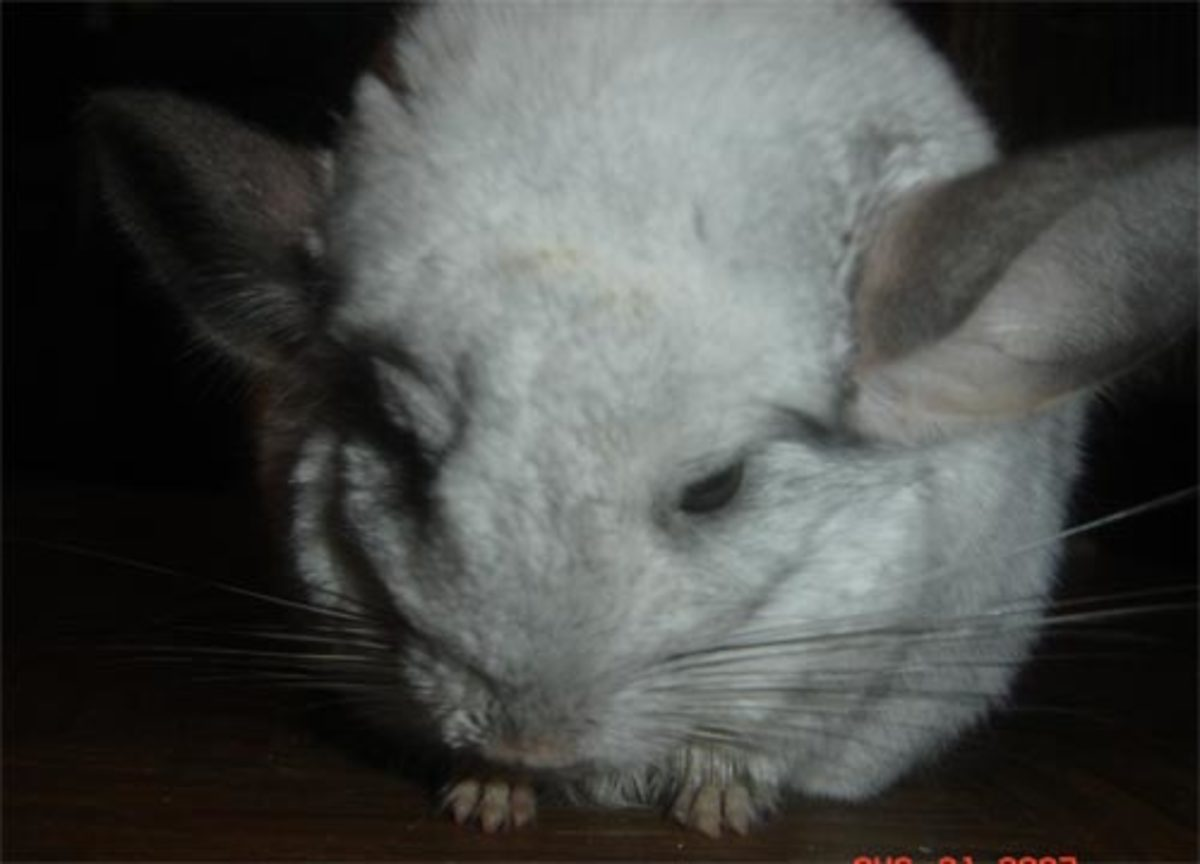 Chiko: August 31, 2007. Please excuse his dirty face. I was giving him syrup to boost his energy.