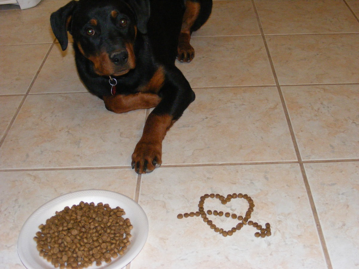 Food is a potent motivator for behavior modification in dogs.