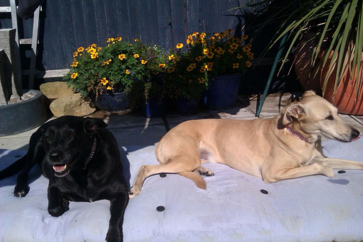 Ebony and Amber relax and enjoy the sunshine