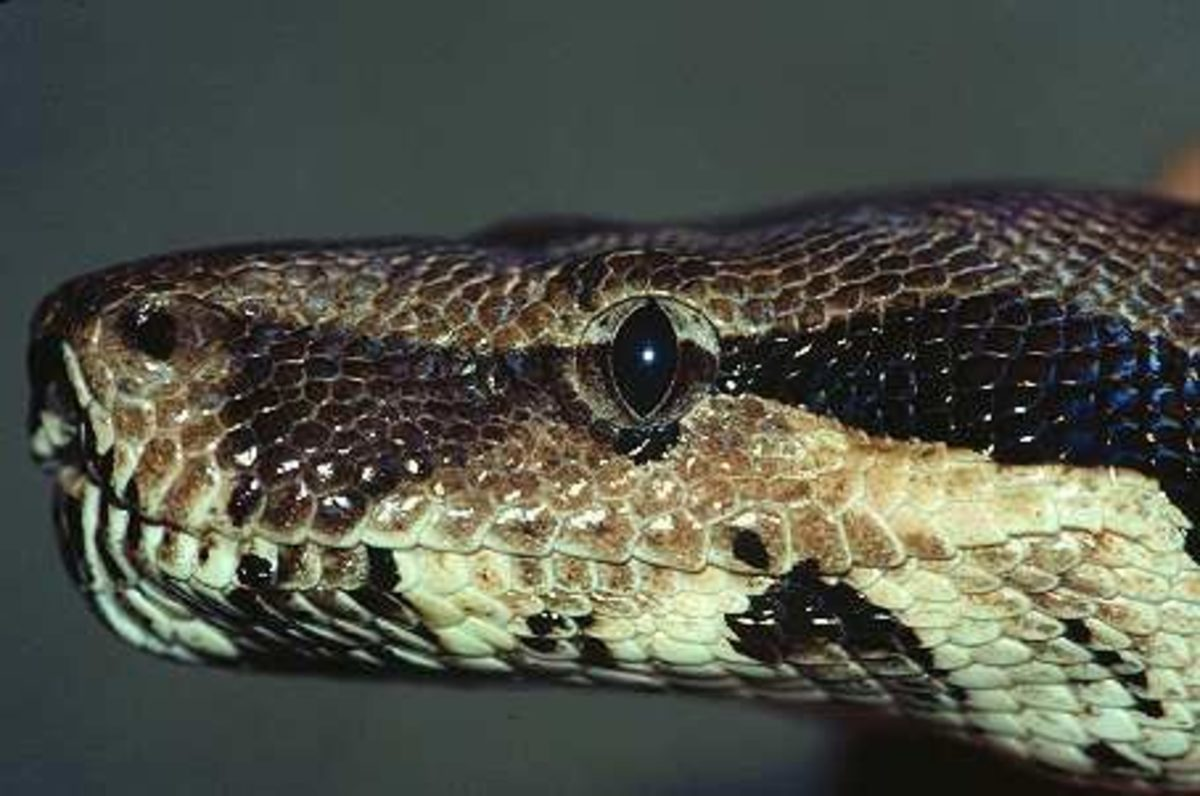 Common Health Problems for Pet Snakes | PetHelpful