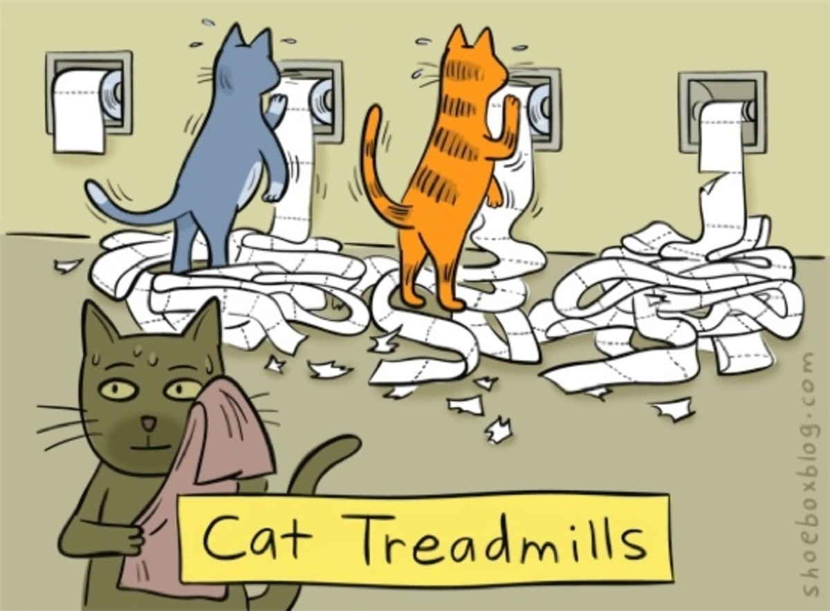 A cat's version of working the treadmill!