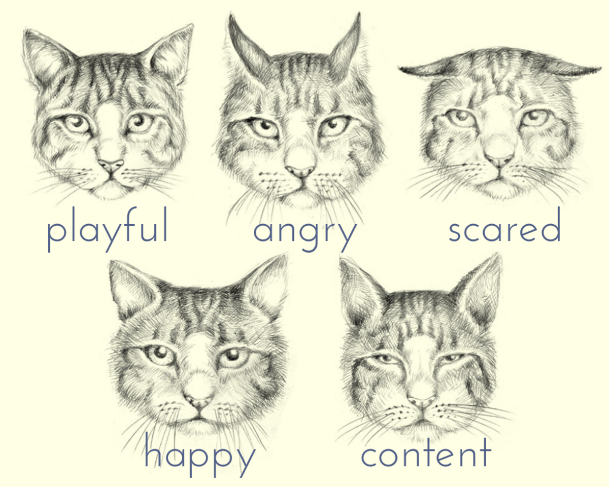 Your cat's ears can tell you a lot about how your pet is feeling.