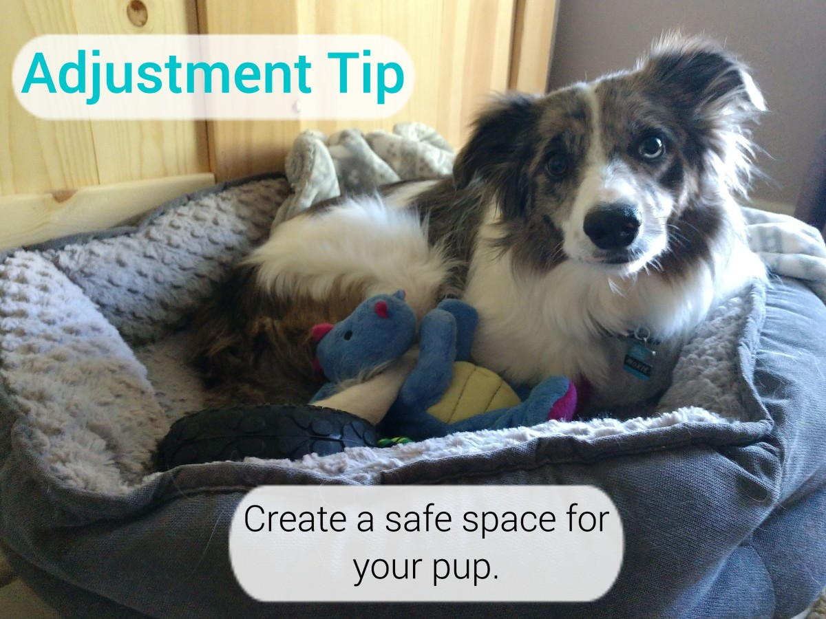 how can i help my dog adjust
