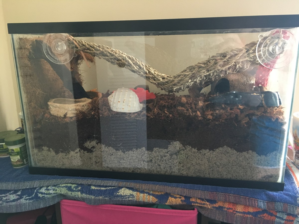 The finished enclosure is ready for me to add my hermit crabs.
