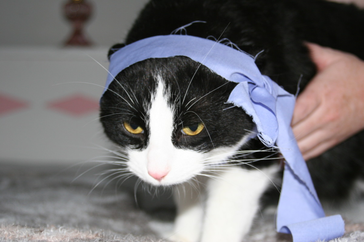 While bordering on idiocy, dressing your cat in kung fu costumes is in fact an extremely gratifying activity for vexing the hell out of your cat, as evidenced here by Sir Snagglesworth III.