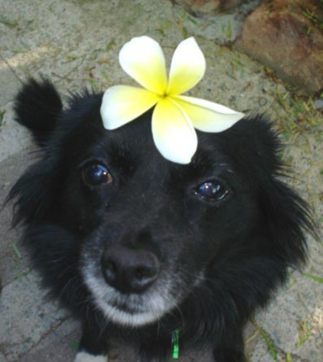 Tips for a Female Dog in Heat