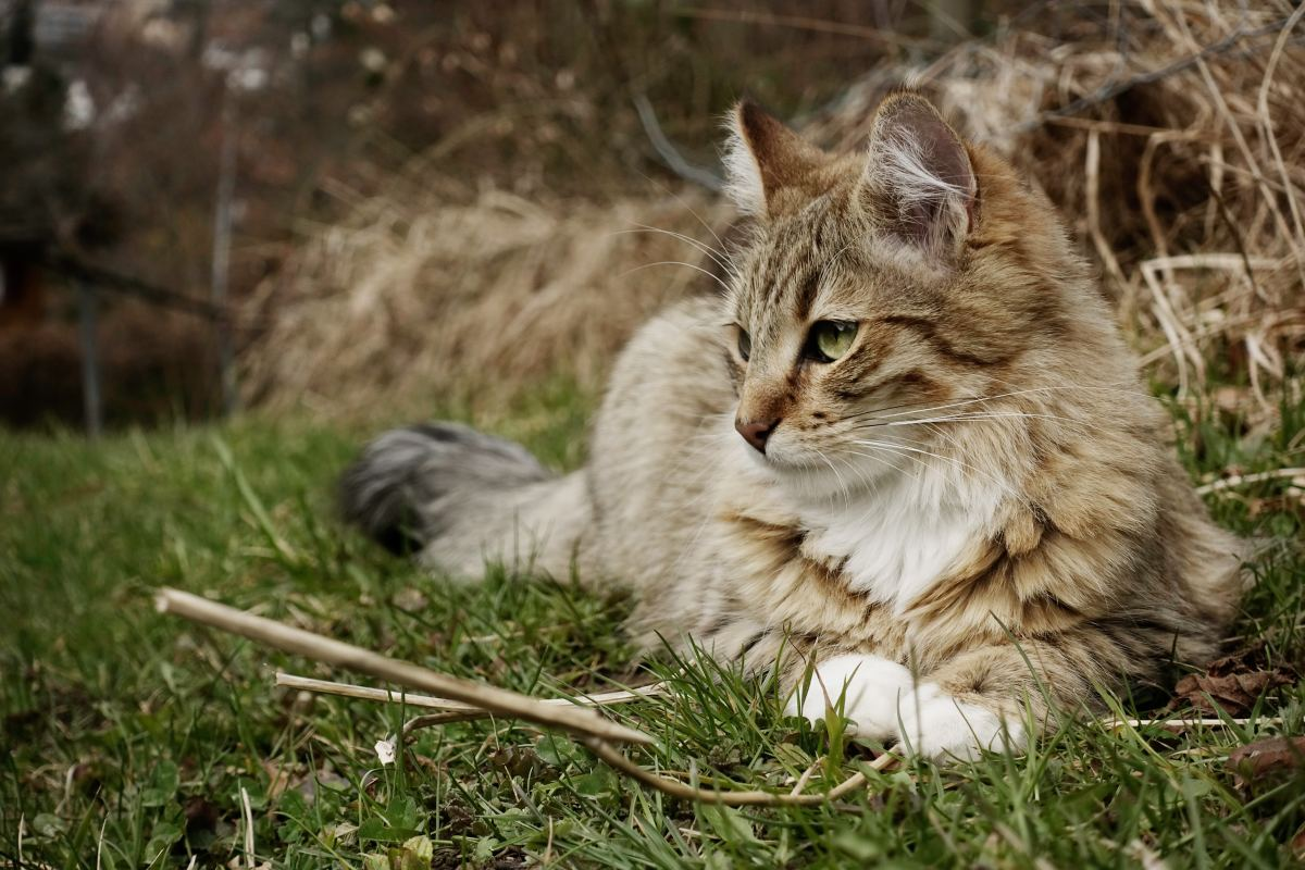 Don't lose hope if your cat doesn't turn up right away. Cats have been known to return long after having gone missing.