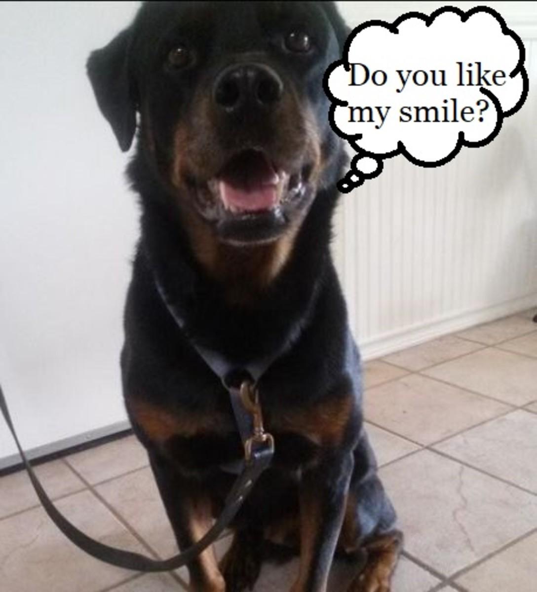 how-to-brush-dog-teeth