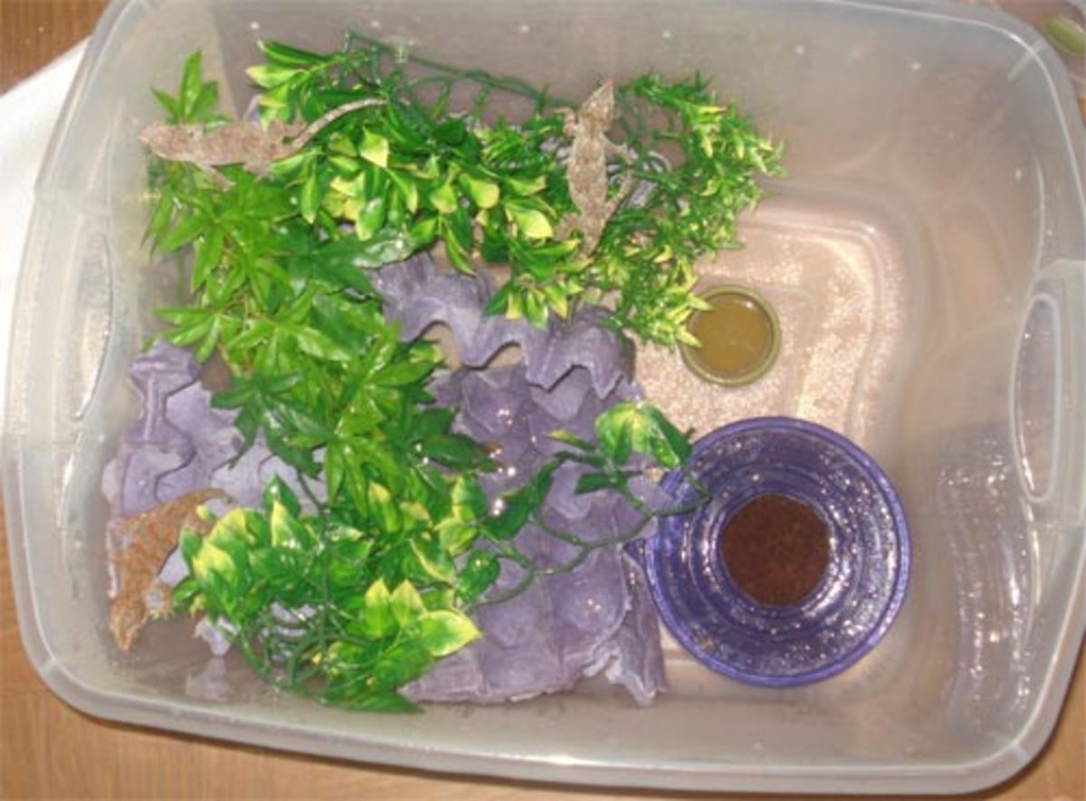 Gargoyle Gecko Tub (Similar to my crested gecko enclosure with torn egg cartons placed randomly)