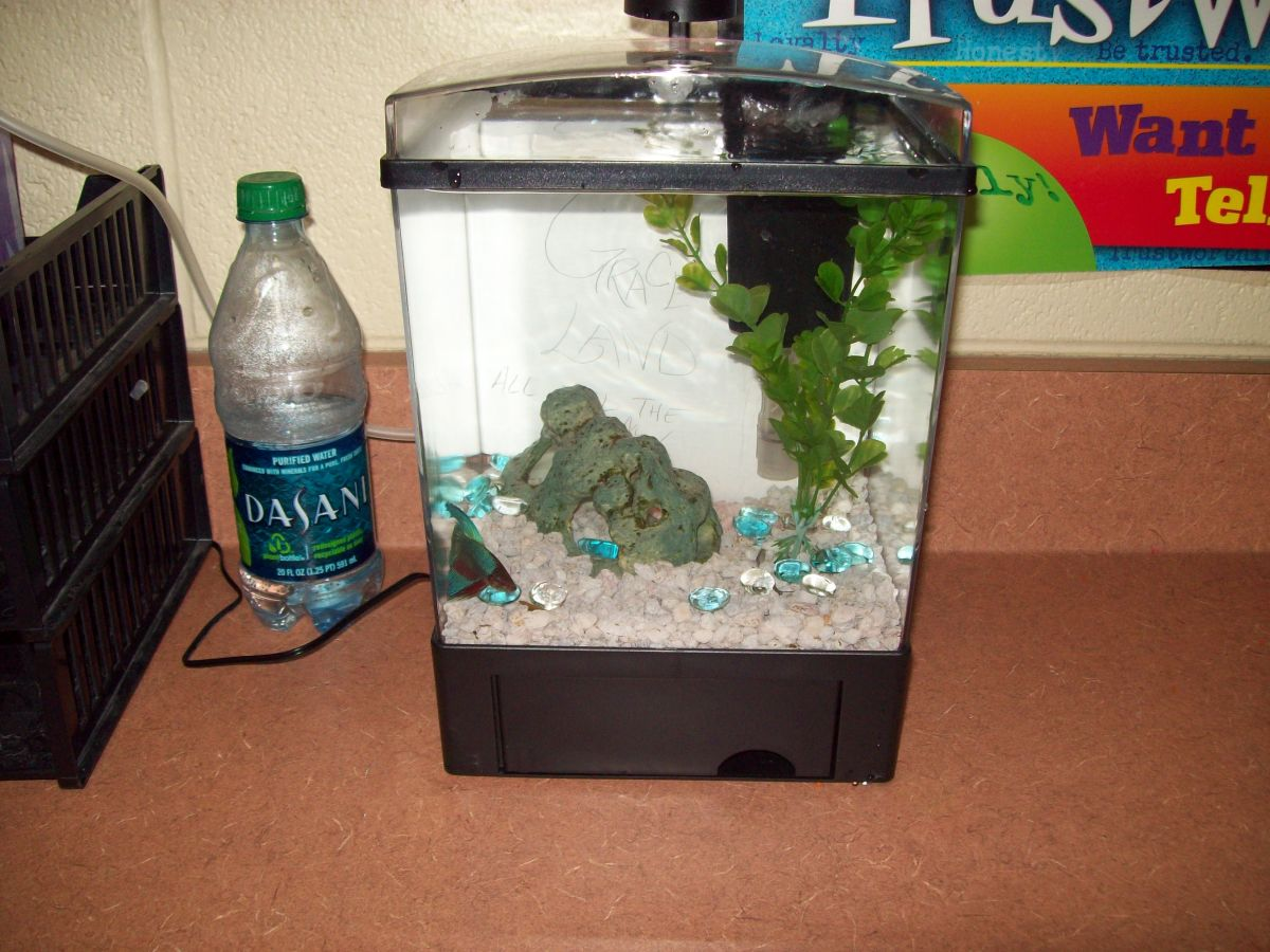 One and a half gallon set up in a classroom