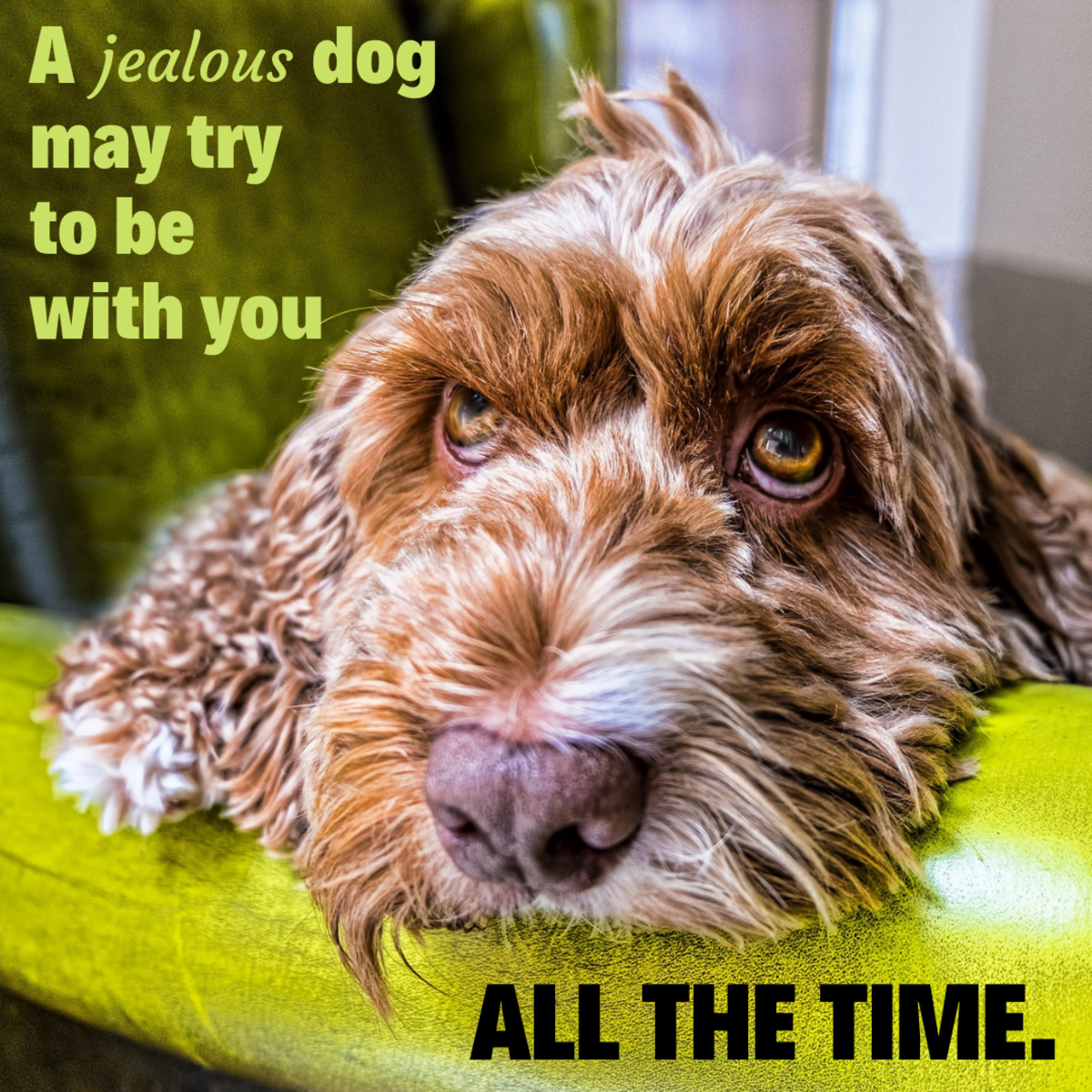 If your dog is always underfoot, it may be a sign of jealousy.