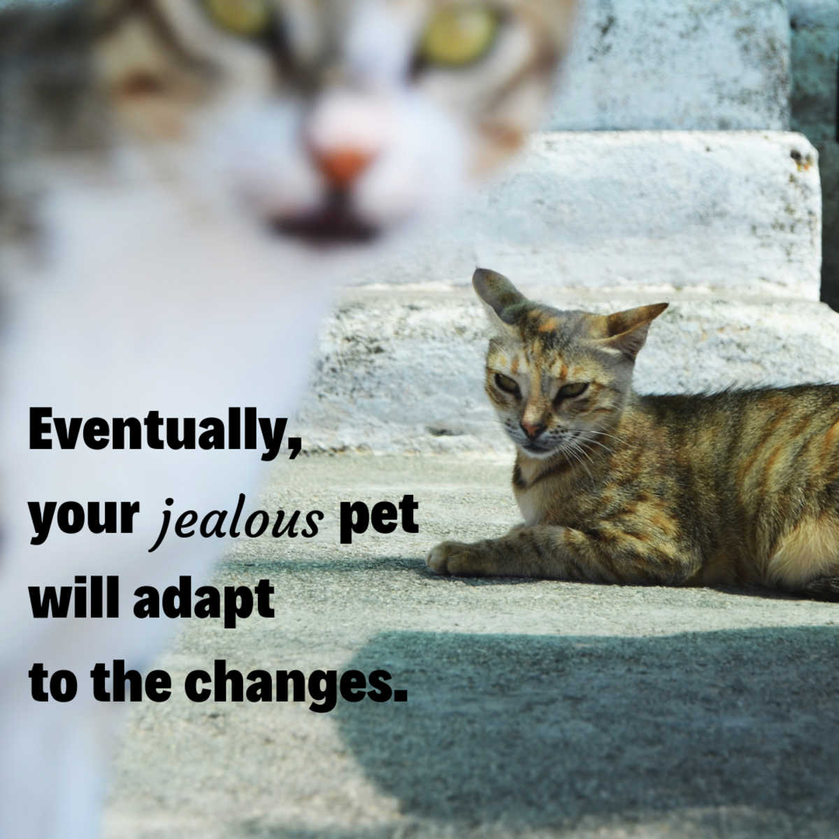 Be patient with your pets. Change is hard for everyone!
