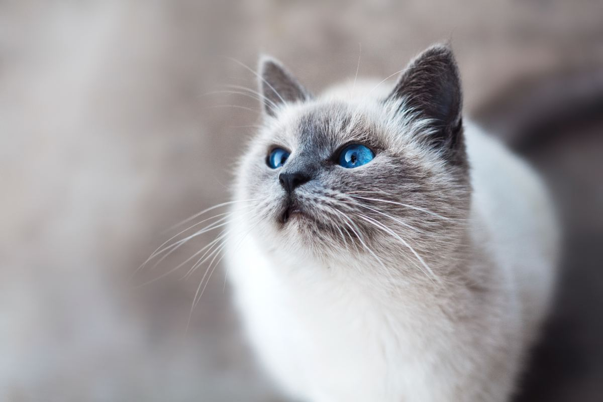 "If your cat is staring at ""nothing,"" don't call the paranormal experts just yet. Most likely, your cat can see something too small for the human eye to catch."