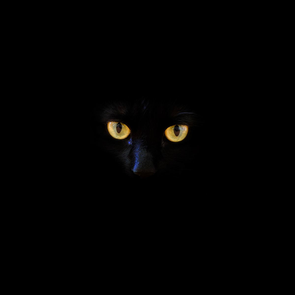 If you own a black cat, you'll probably only be able to see their glowing eyes in the dark.