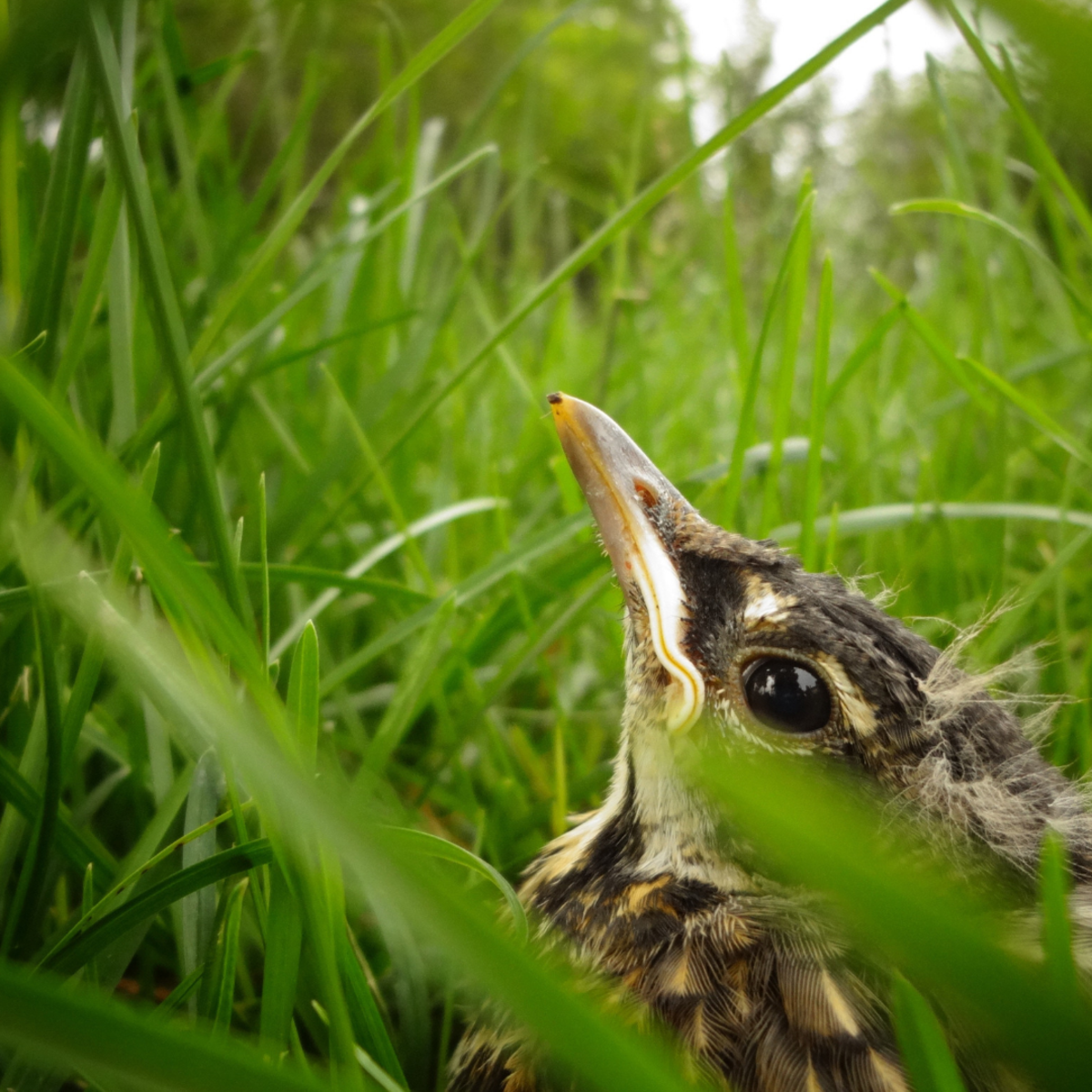 Sometimes less is more when caring for an orphaned baby bird—take them to a wildlife center.