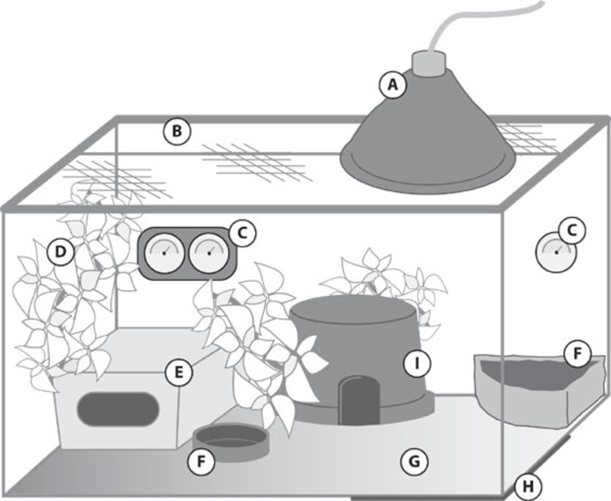 How To Set Up A Leopard Gecko Tank