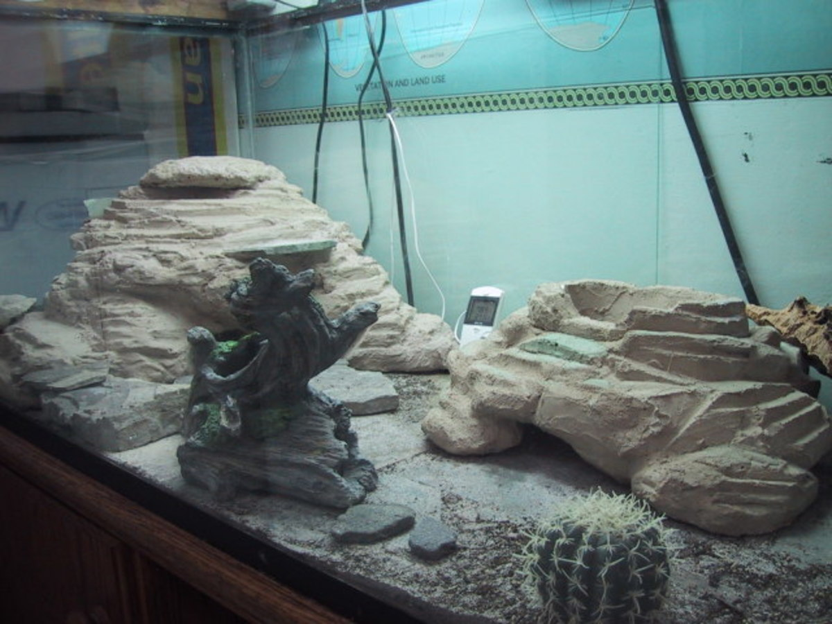 How To Set Up A Leopard Gecko Tank Pethelpful