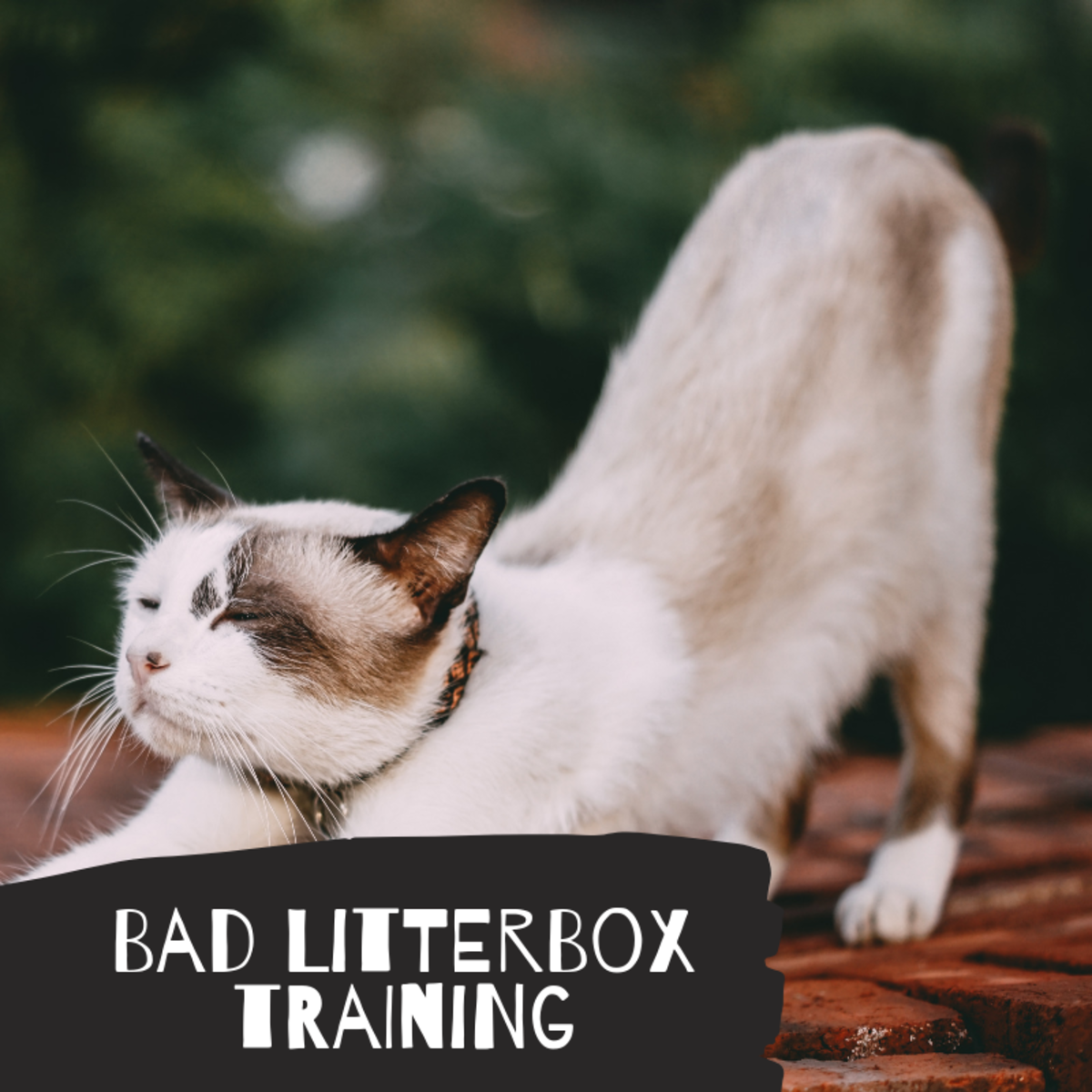 Bad Litter Box Training