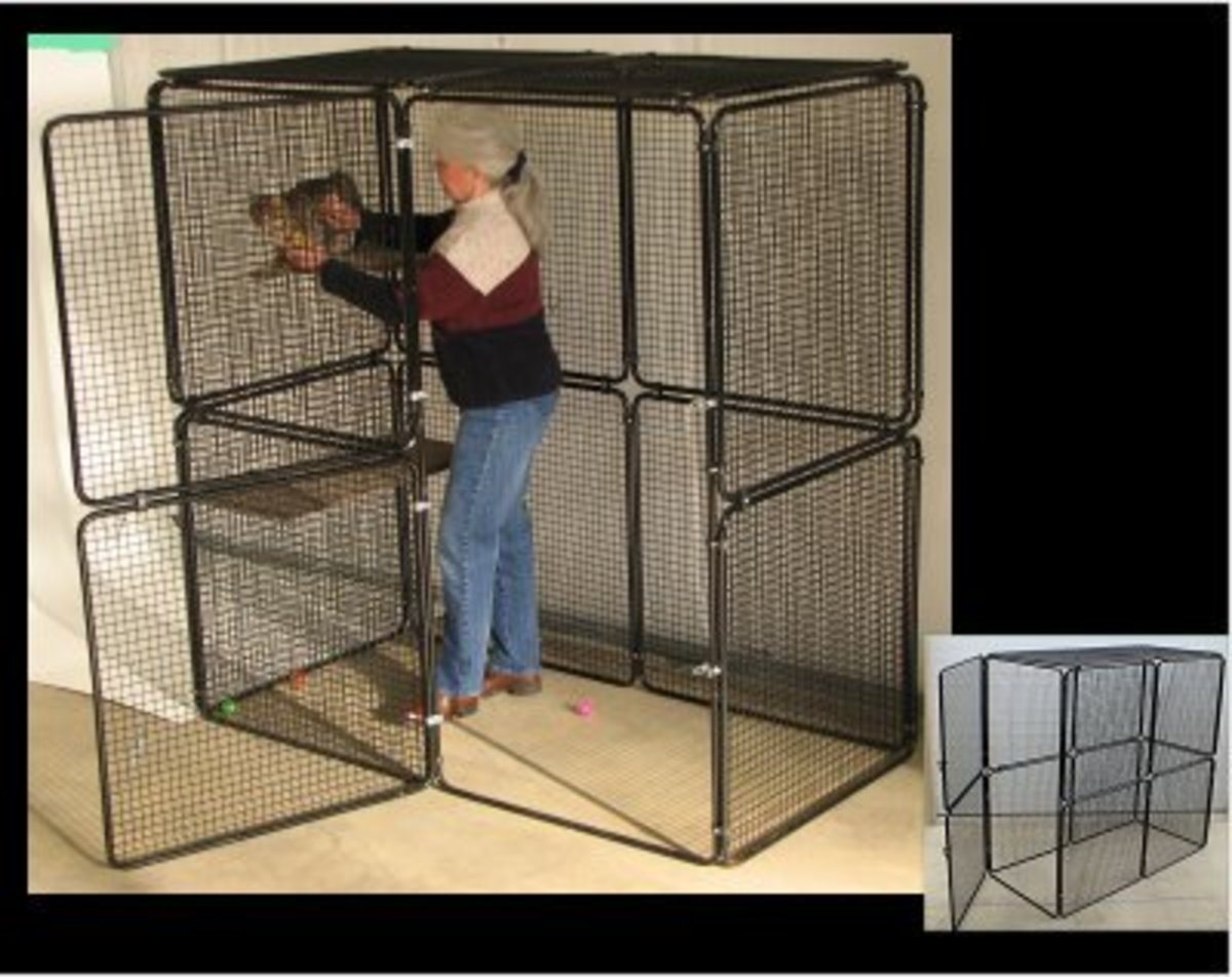 A luxury suite as far as quarantine cages go! This enclosure is made by www.cats-on-line.com