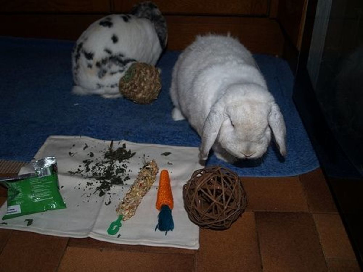 Rabbits Playing with Willow Toy