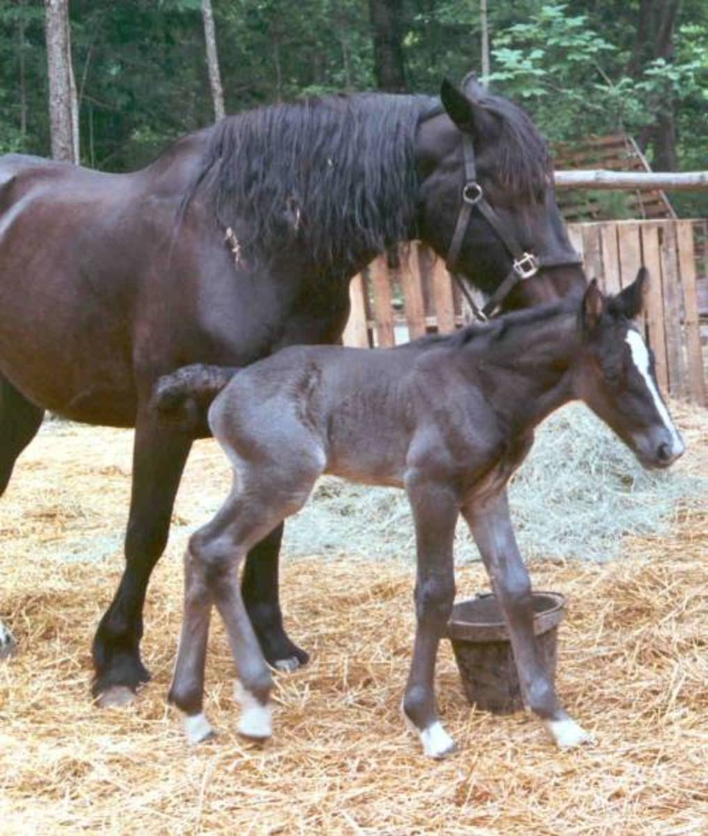 The long Awaited Day and a Healthy Foal