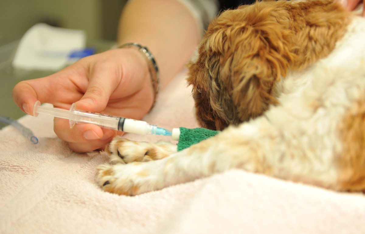 Talk to your vet about your concerns