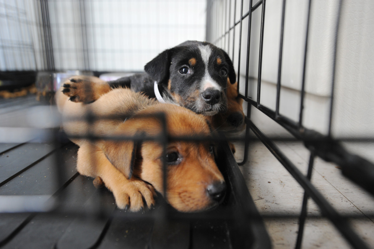 There are more homeless pets in shelters than there are homes available.