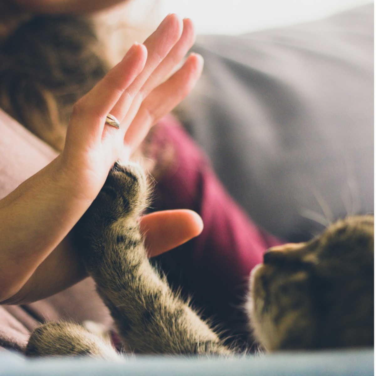 Bonding with your cat will bring the two of you closer to becoming best friends.