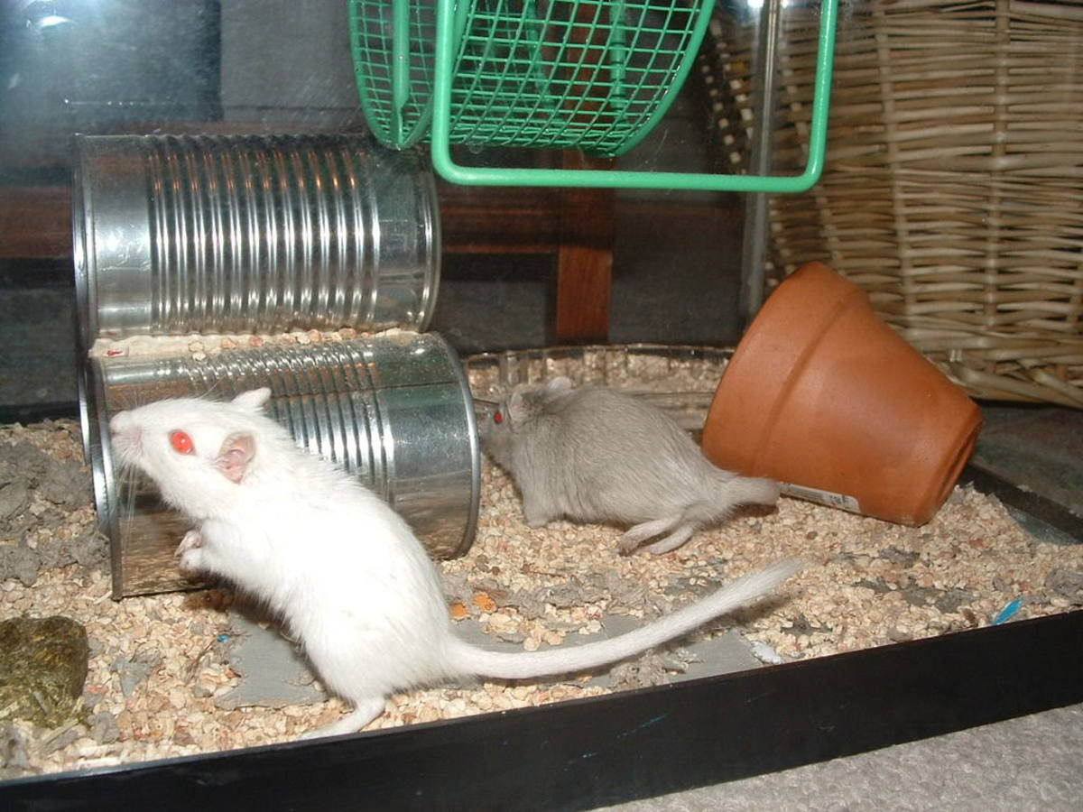 How to Help Depressed Gerbils