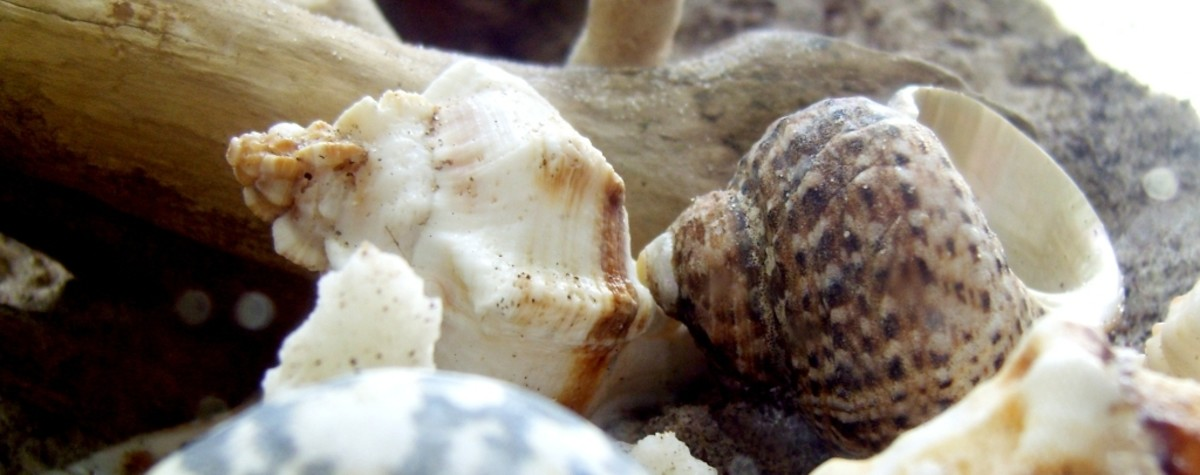 A hermit crab may need to try on several shells before it settles on a good one.