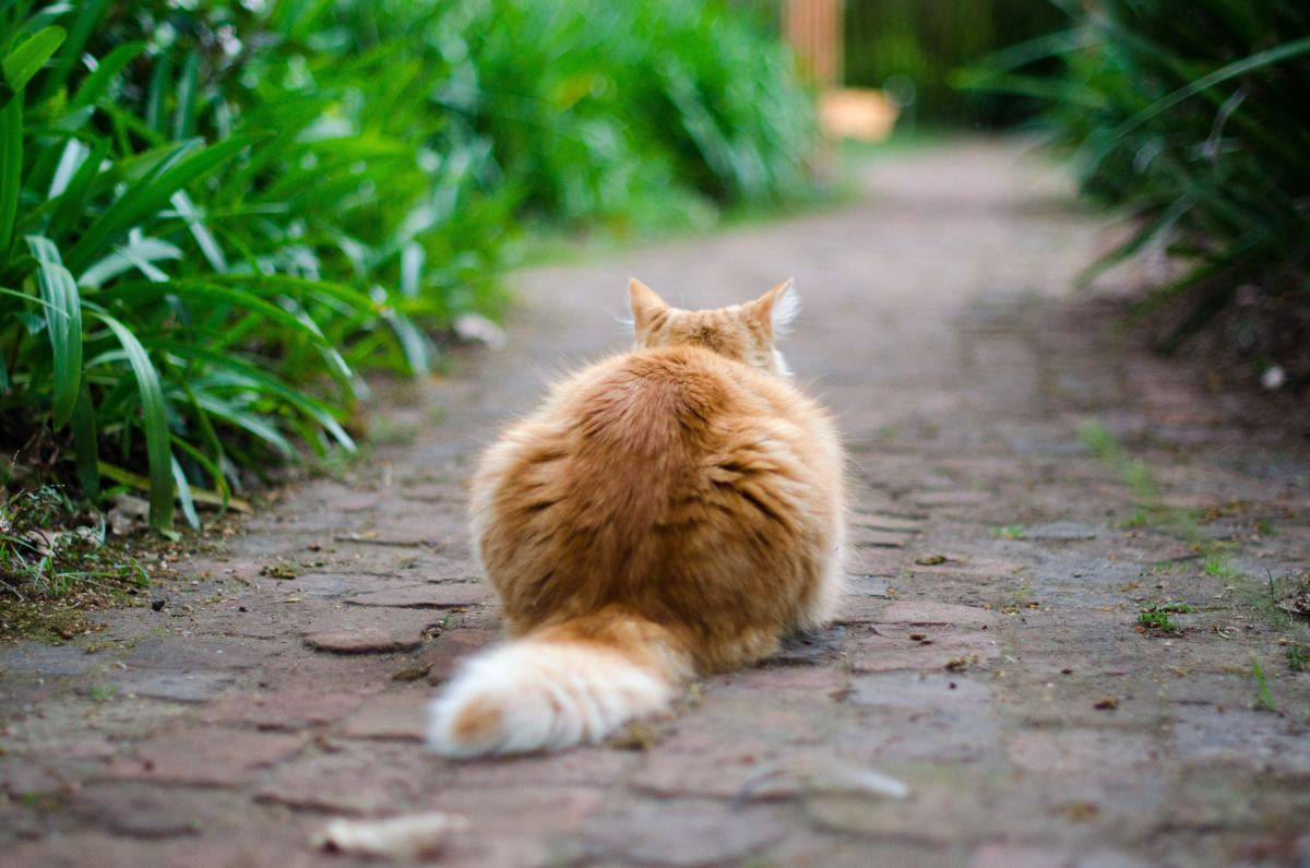 "Cats can transmit ""catch scratch fever."""