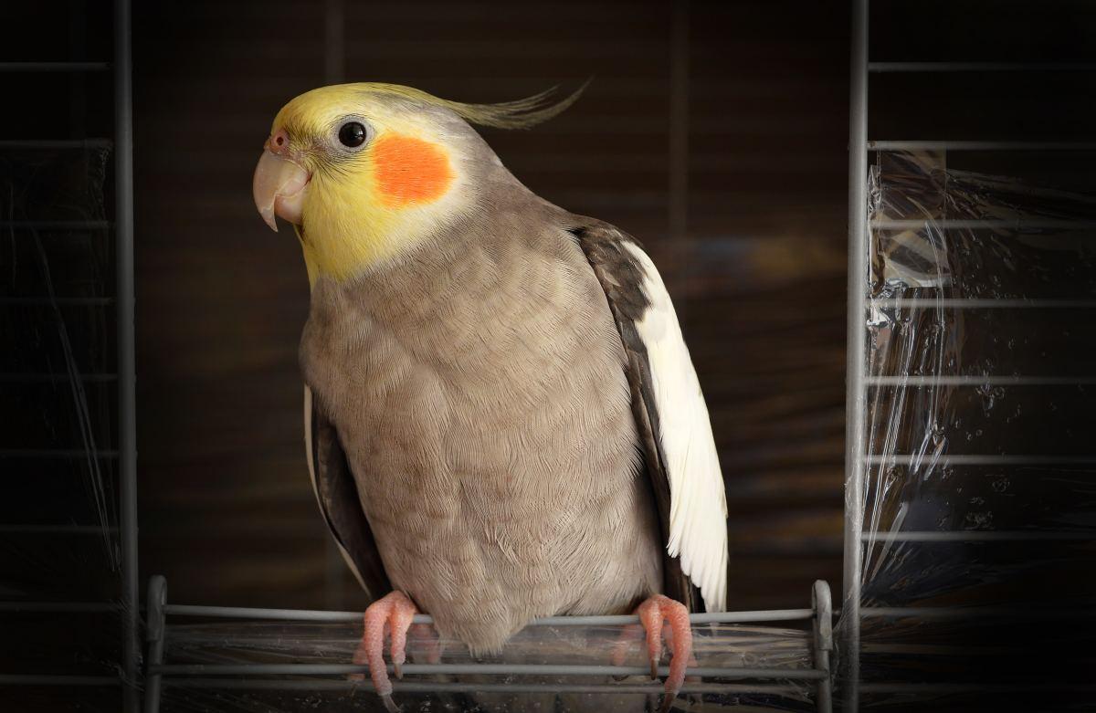 Birds transmit psittacosis.