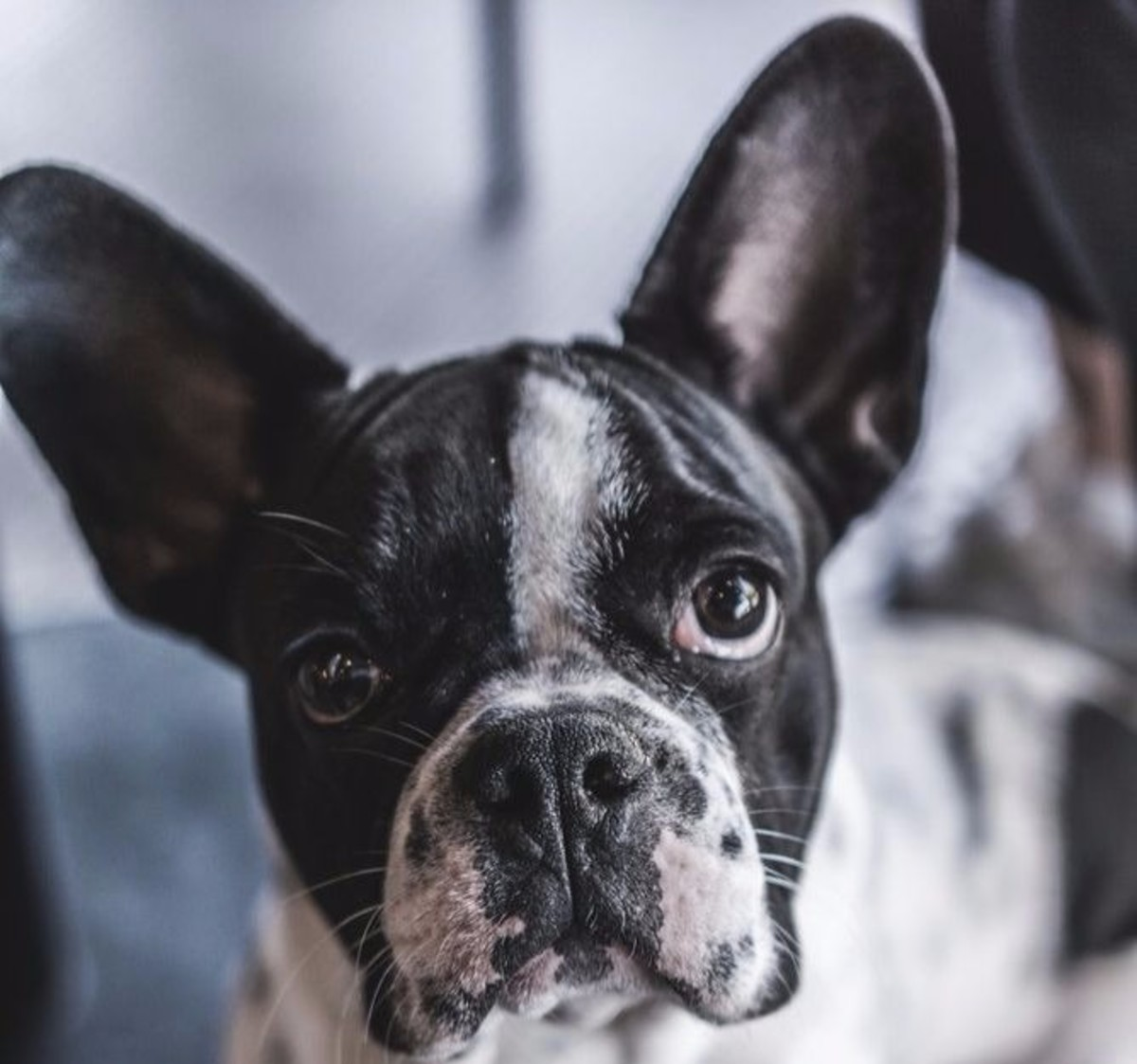 Dogs with erect ears are less likely to get infections because their ears receive more sunlight and airflow.