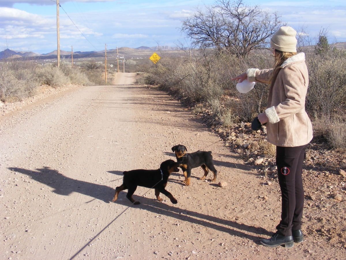 Walking multiple puppies may be fun, but it can be a struggle to keep your leashes from tangling.