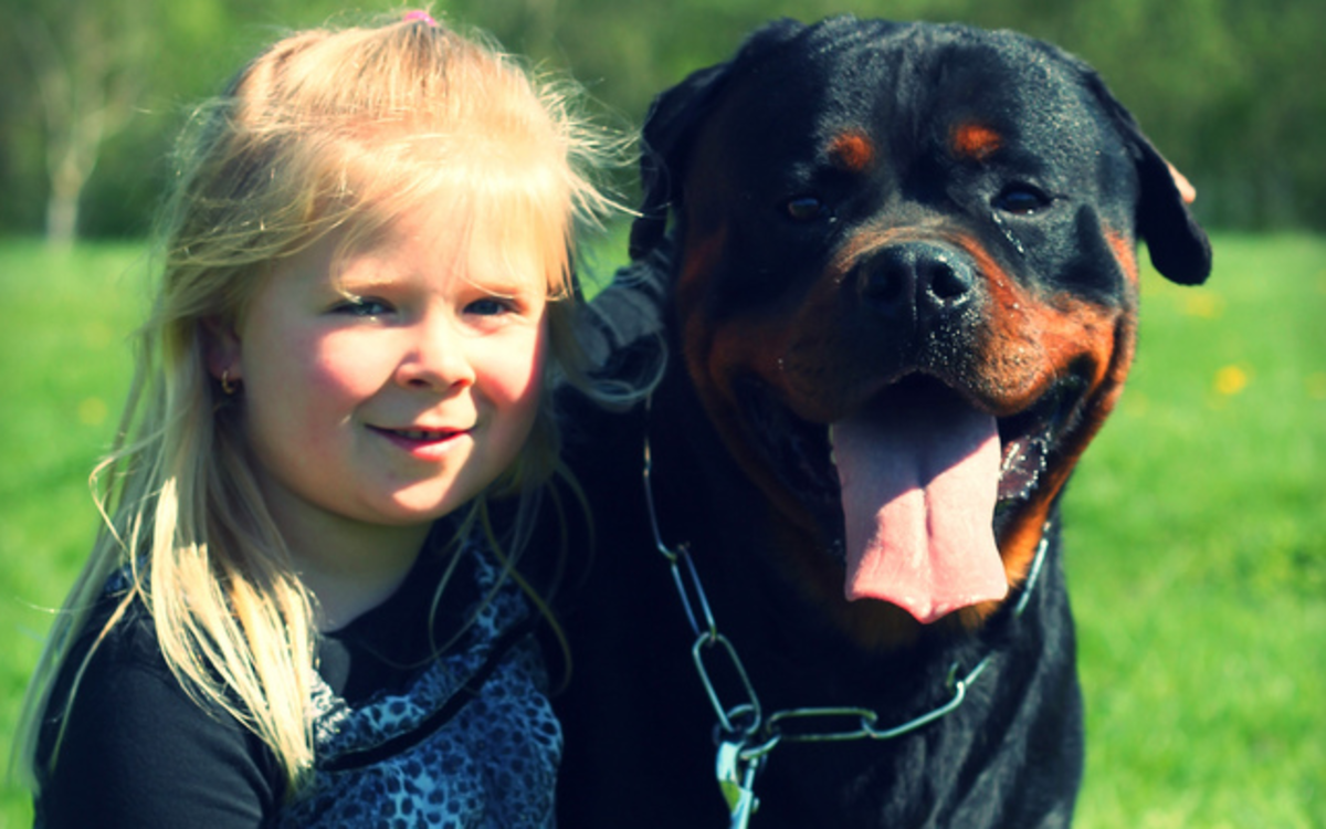 Rottweilers can be very patient and loving.