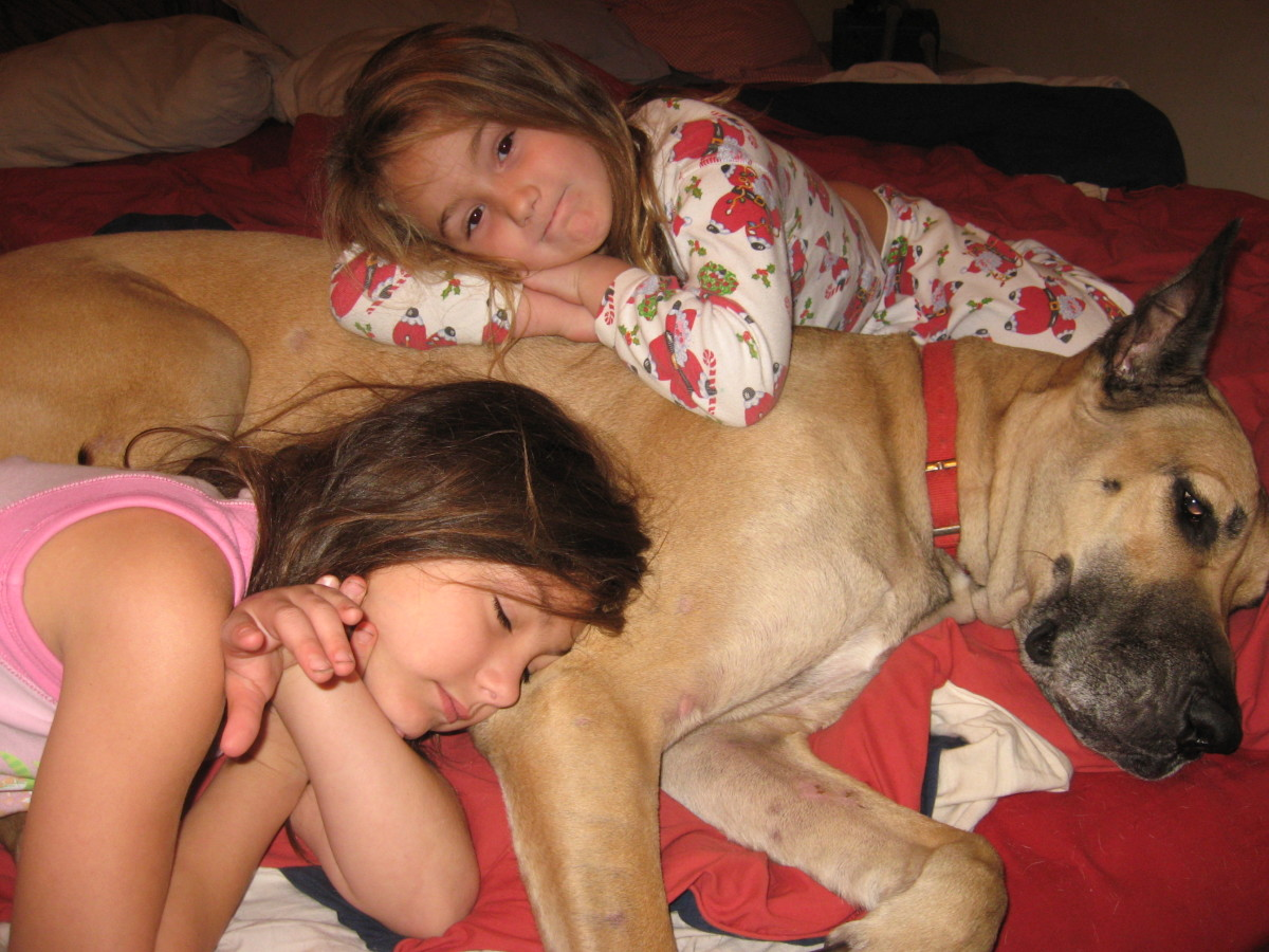 "Hamlet especially enjoys napping with ""his"" kids."