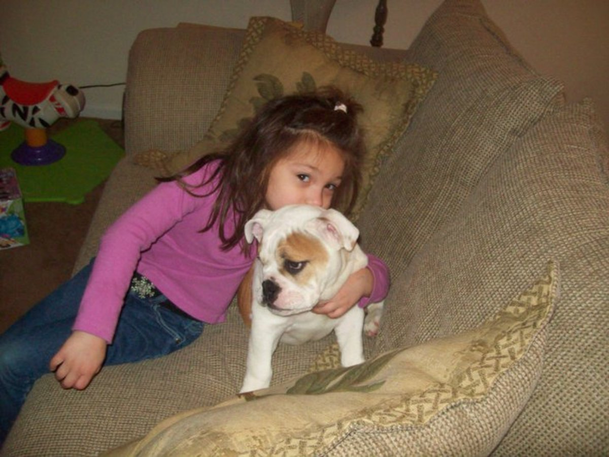 Bulldogs are sweet and protective.