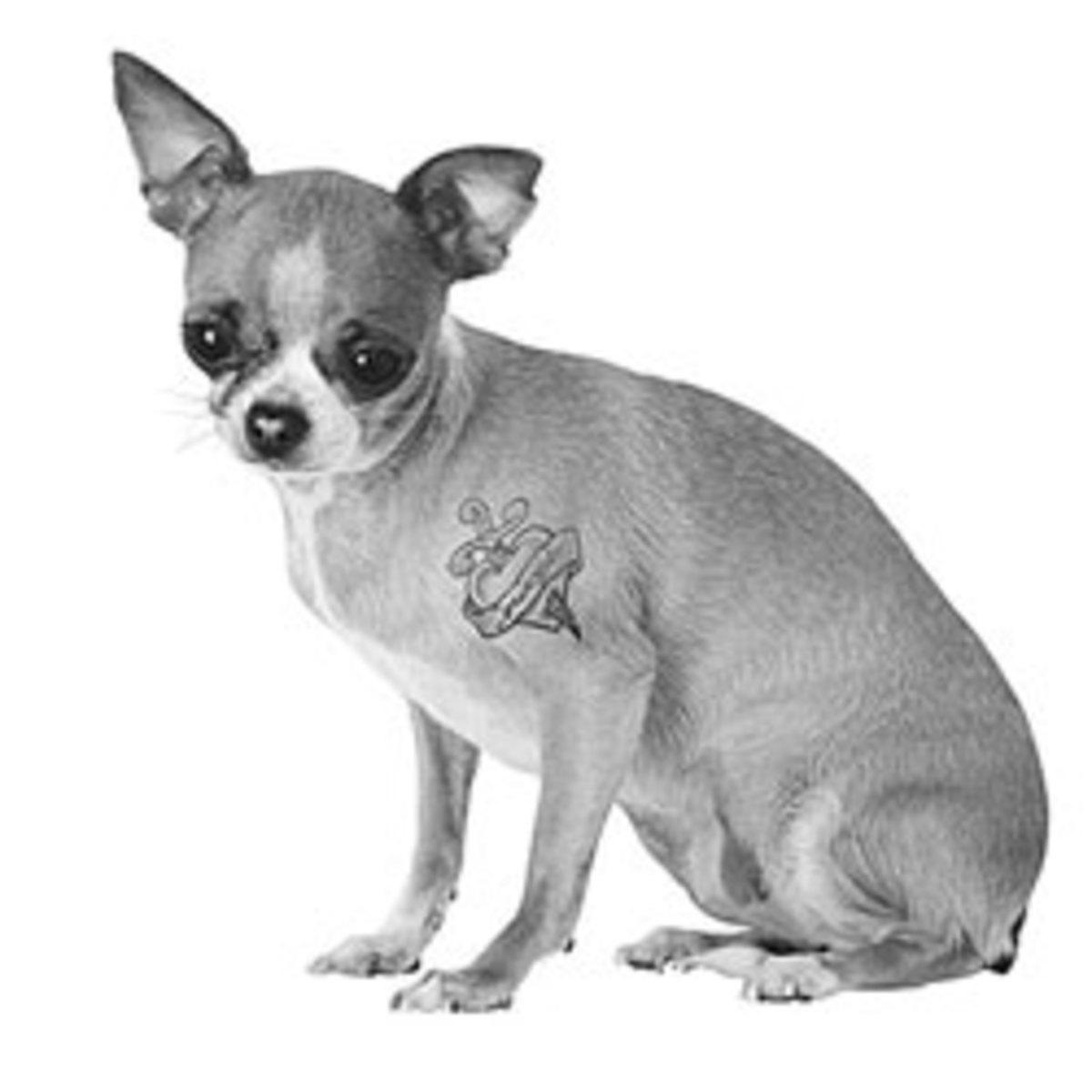 Tattooed dog.