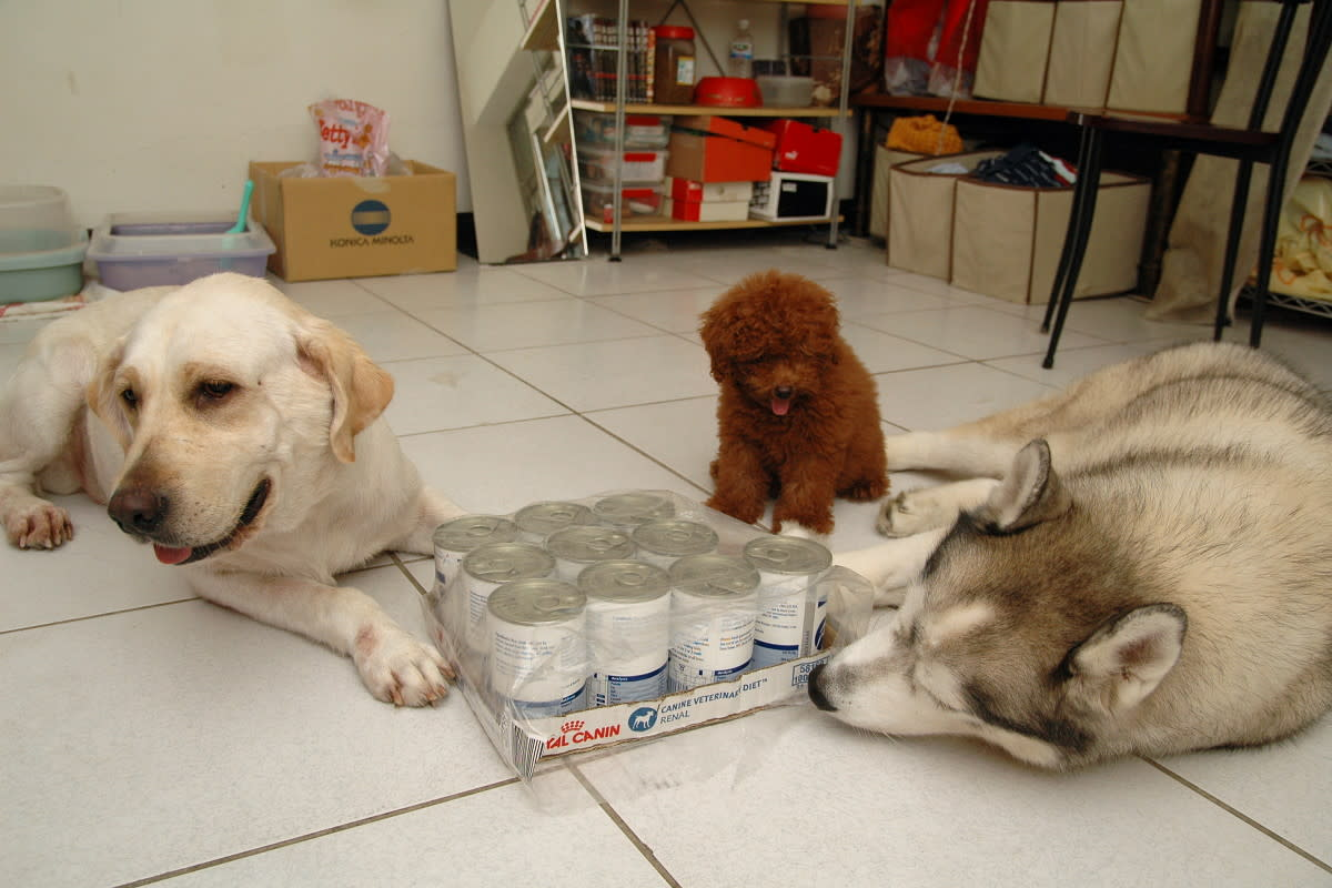 Dogs with their canned food