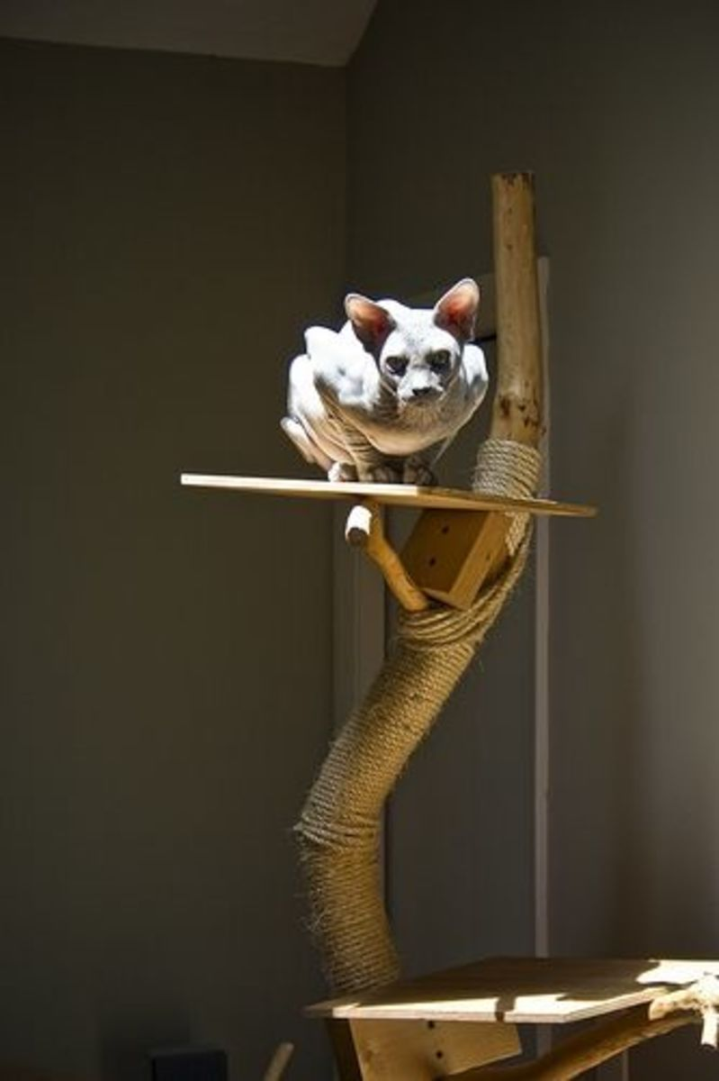 Anyone can do a cat tree like this one! All you need is a great branch. Use a little ingenuity to attach it to a solid base and add some rope and a couple shelves.