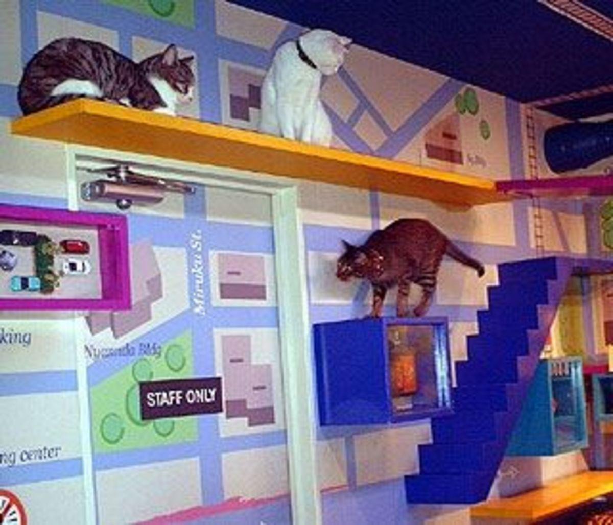 Fun cat room ideas
