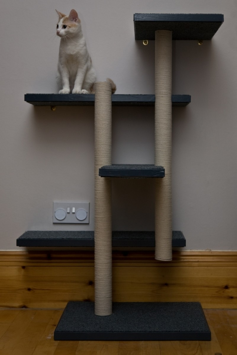 make your own cat trees towers and other structures