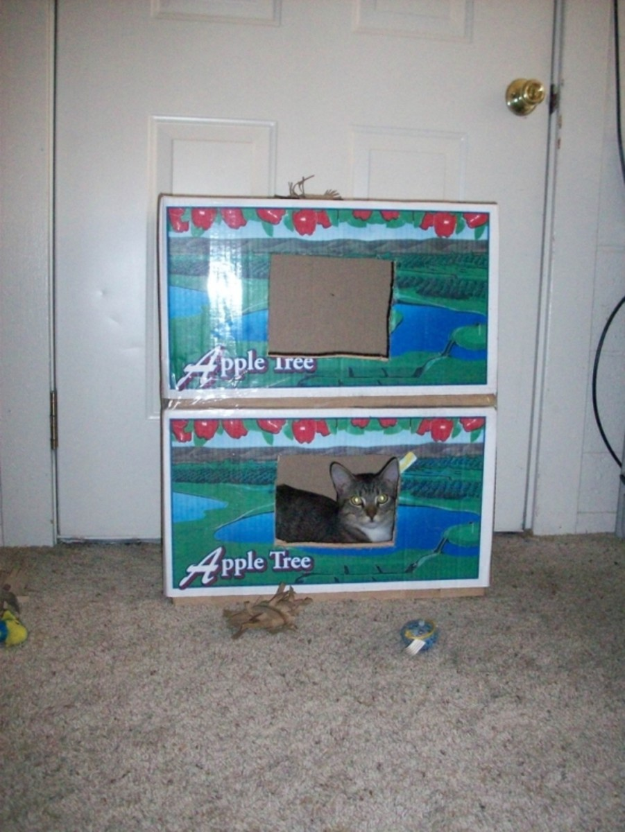 Finished cat condo already with an occupant