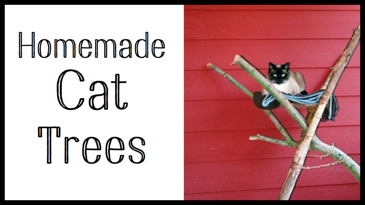 make_cat_trees